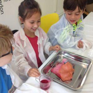 Kids With Brains Science Workshops