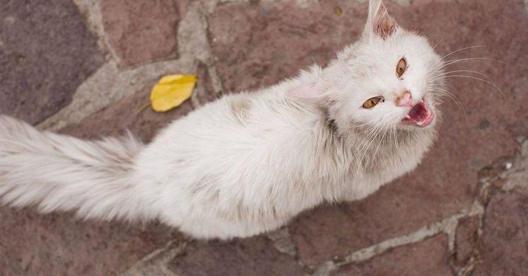 KUNKUSH: THE REFUGEE CAT